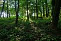 Lesná spod Šimonky