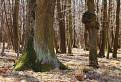 Jelenecký les