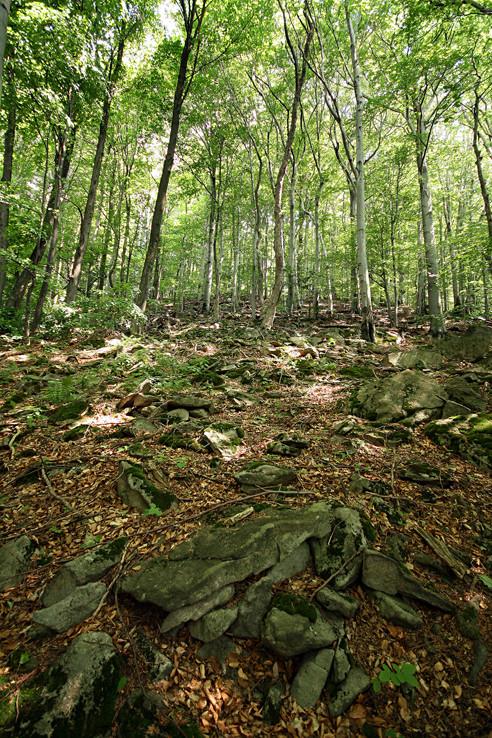 Prírodná rezervácia Oblík