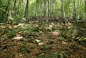 Prírodná rezervácia Oblík / 1.3000