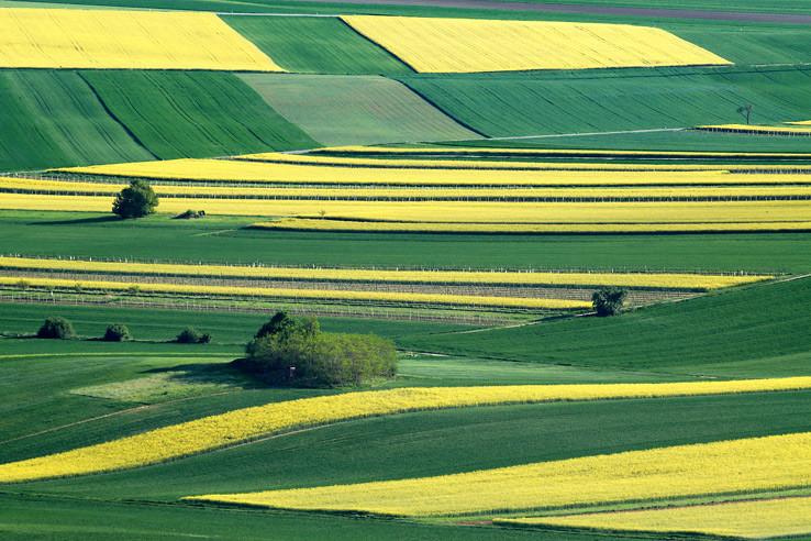 Žltozelený koberec