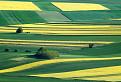 Žltozelený koberec / 1.0000