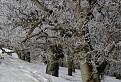 Zimná krása II.