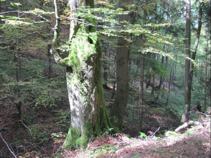 Z prírodnej rezervácie Čertov