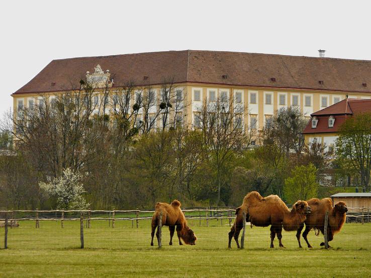 Zámocké ťavy