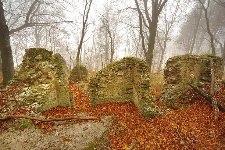 V lese pod Pohanskou