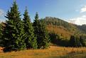 Suchý vrch /1267/ a štyri smreky