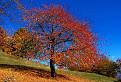Farebná jeseň / 1.0968