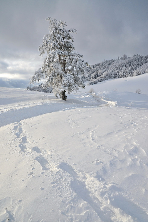 Štiavnické snežnicovanie II.