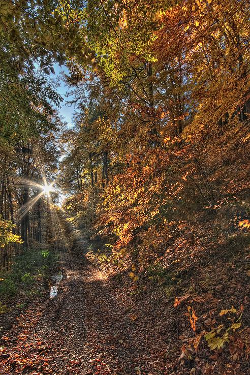 Lesné cesty