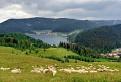 Na kopci, pri ovciach