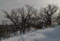 Čĺnkovanie v snehu