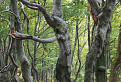 Malofatranský les
