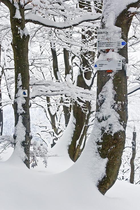 Zima v Sedle za Drieňkom