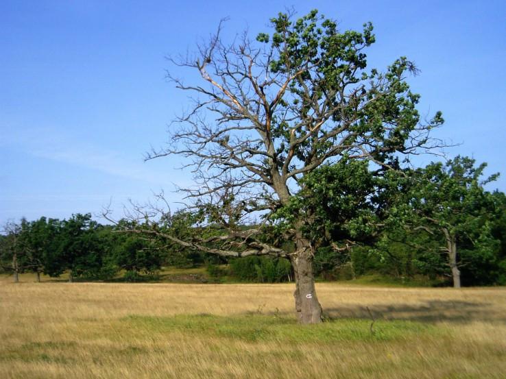 Strom života a smrti