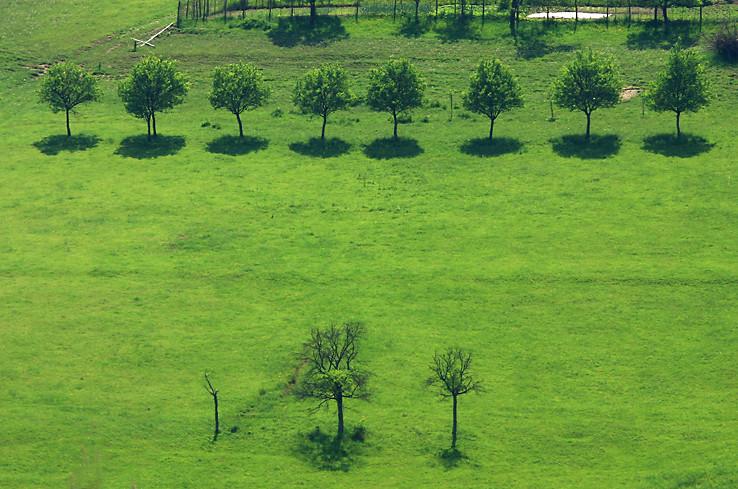 Lazy a na nich stromčeky