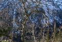 V sieti stromov