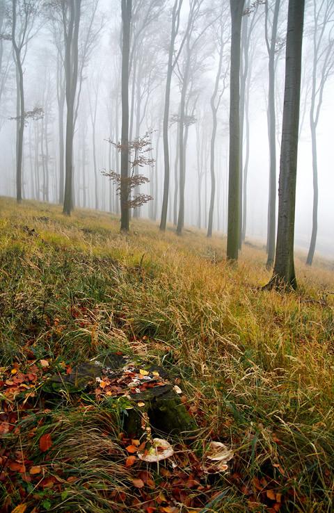 Tajomný les v Karpatoch II.