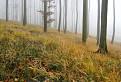 Tajomný les v Karpatoch II. / 1.0303