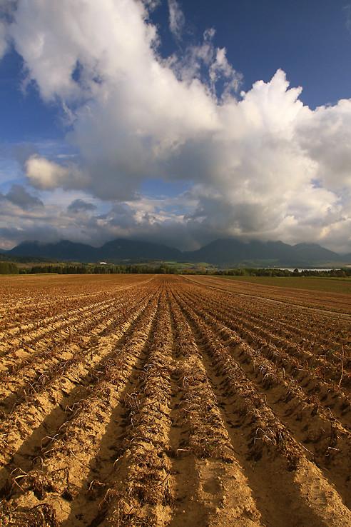 Koník, pole a Chočské vrchy