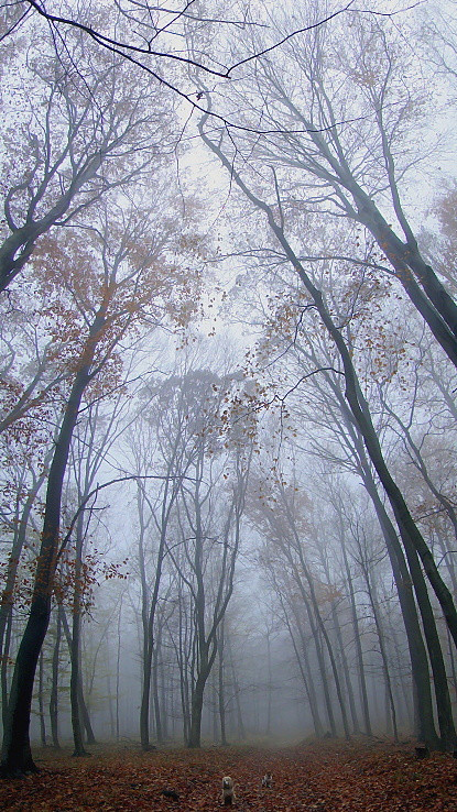 V hmle II.