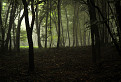 lesy posledných dní