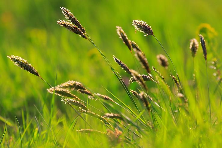 v jarnej tráve ...