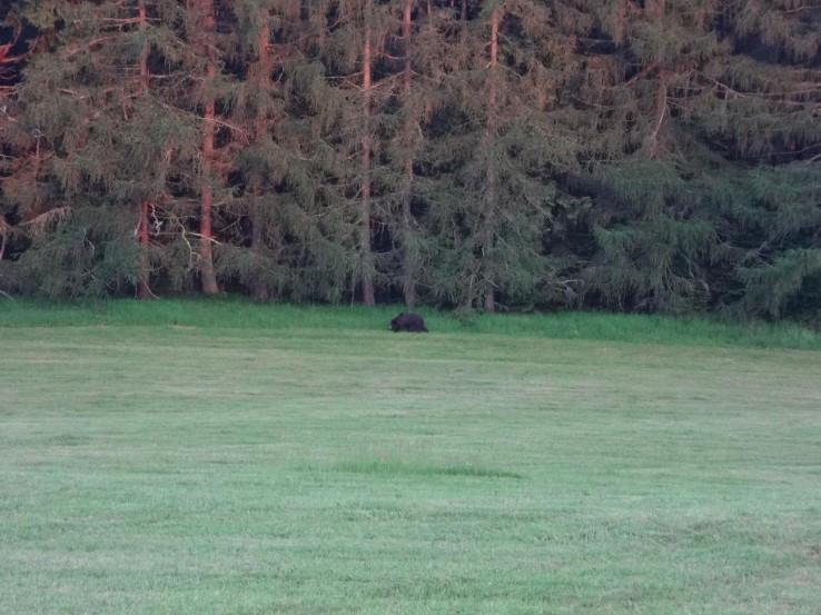 Medvěd ze Žiaru