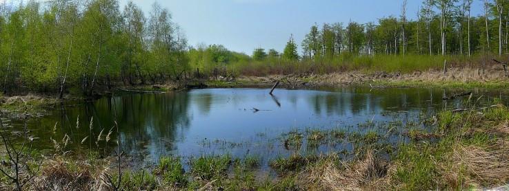 Jazero pod Klokočinou II.