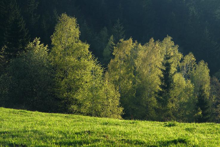 Zelená upokojuje