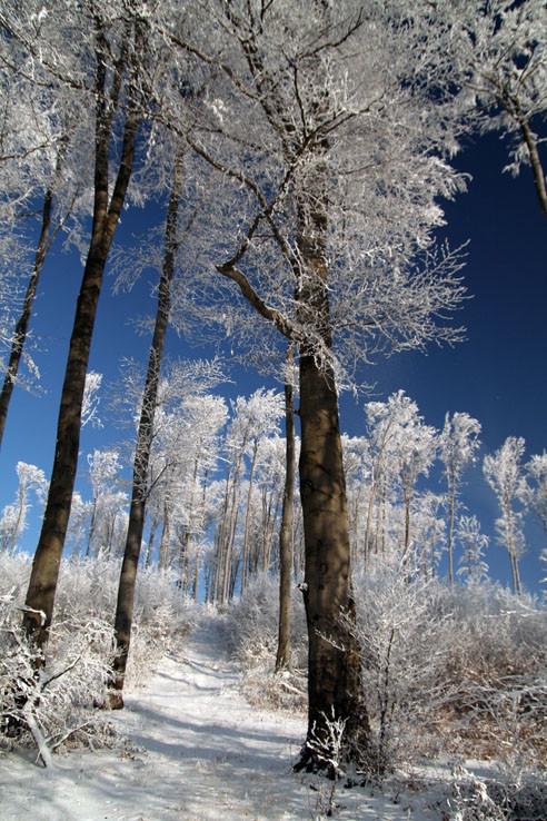 Jahodná - stromy na Vianoce