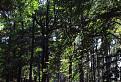 Tríbečský les