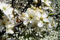 Mravec v kvetinovej džungli