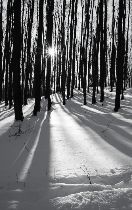 Čas dlhých tieňov