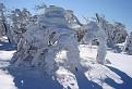 Snehom obalené, vetrom vytvarované