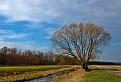 Strom pri Rudave