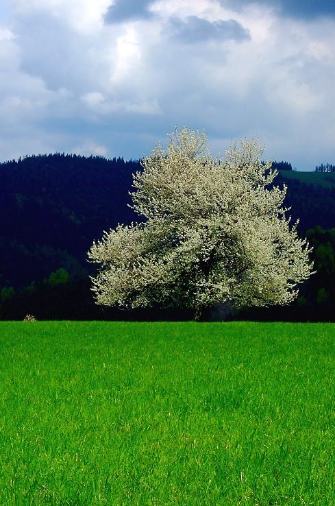 Jar v Javorníkoch