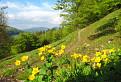Kvety a hory I
