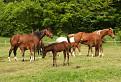 Kone z Penhýbla