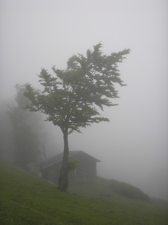 Veľká Fatra, strom pod sedlom Ploskej