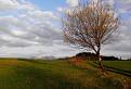Značkársky strom na Žiarcoch