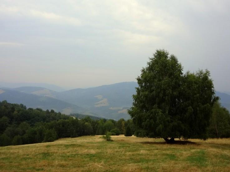 Strom samotář na Slopove