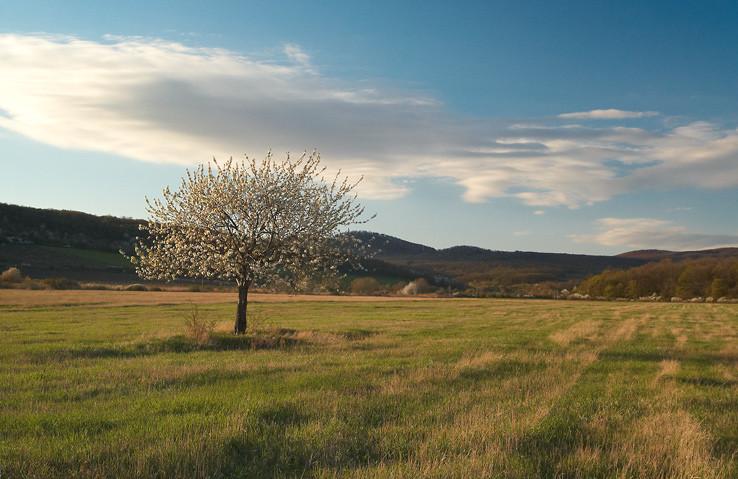 Krajina pod Malými Karpatami