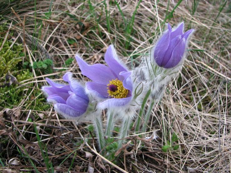 Čachtická flóra
