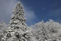 Biela zima