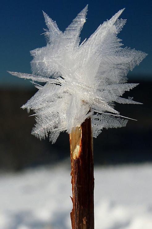 Žezlo ľadového kráľa