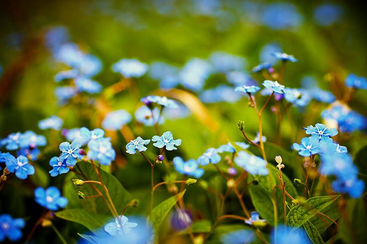 Jarná kvetena...
