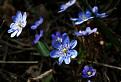 Jarný pozdrav z Podhorode
