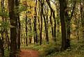 Zoborská farebná jeseň