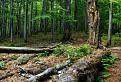 Zvyšky pralesa